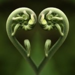 heart frond