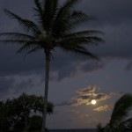 Kipahulu palms in the moonlight