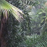 rainy palm forest by kb