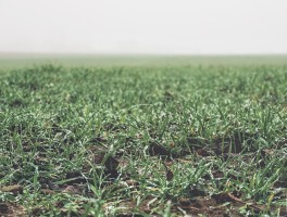 Poem of the Week: To the Grass of Autumn