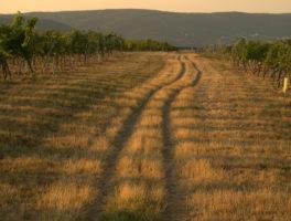 """""""Dry Ground"""", by W.S. Merwin"""